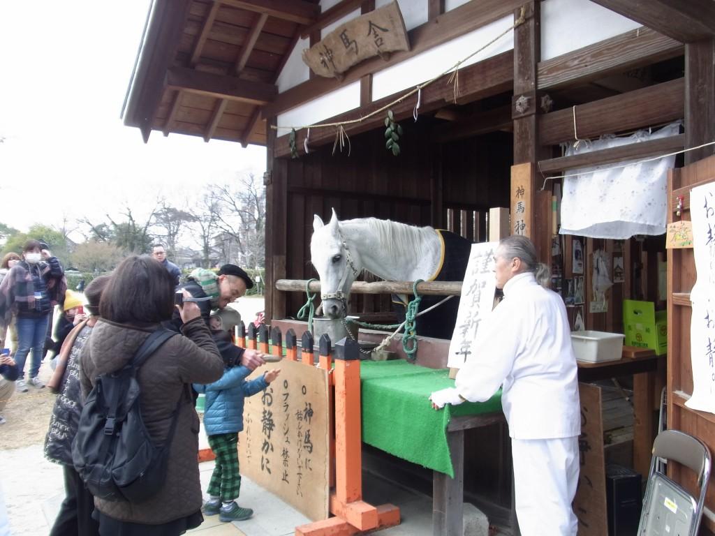 上賀茂神社の神馬
