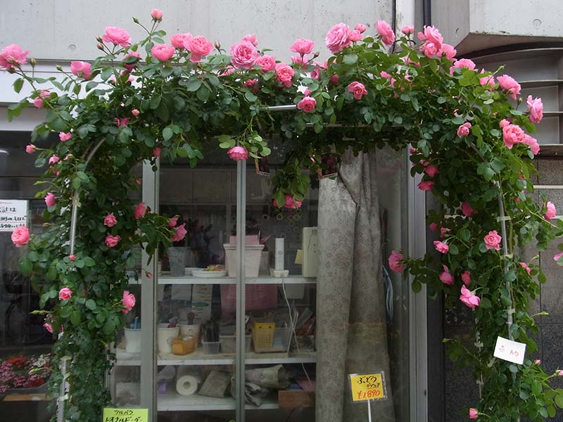 ピンクのバラのアーチ